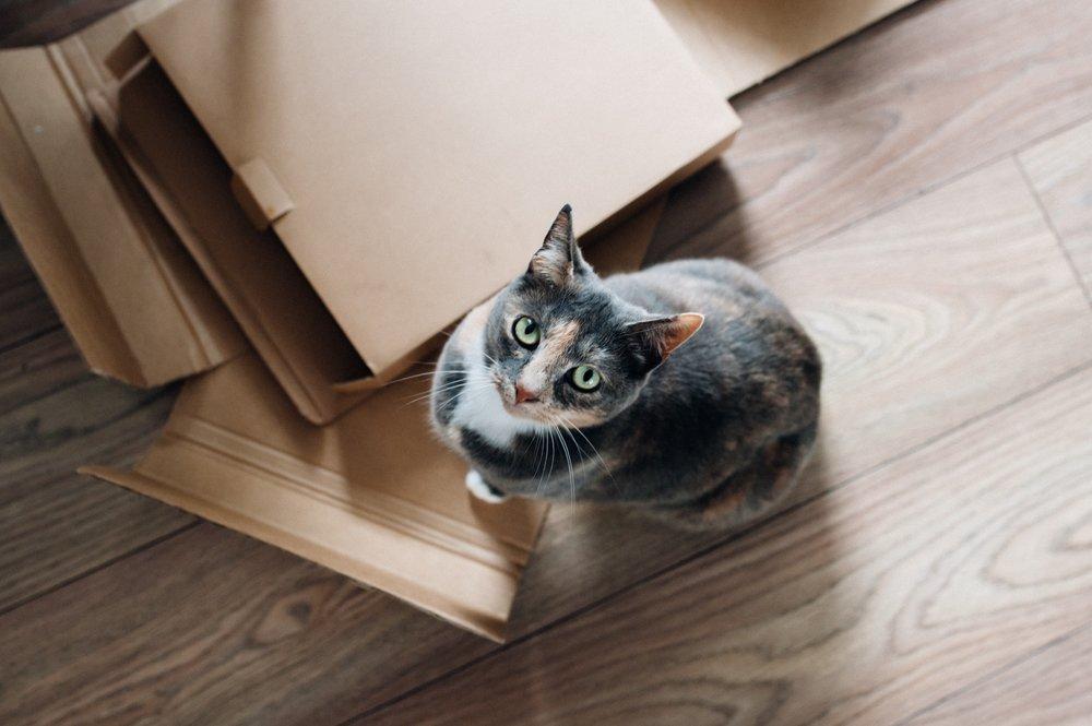 UVG Image Bank - Cat 12.jpg