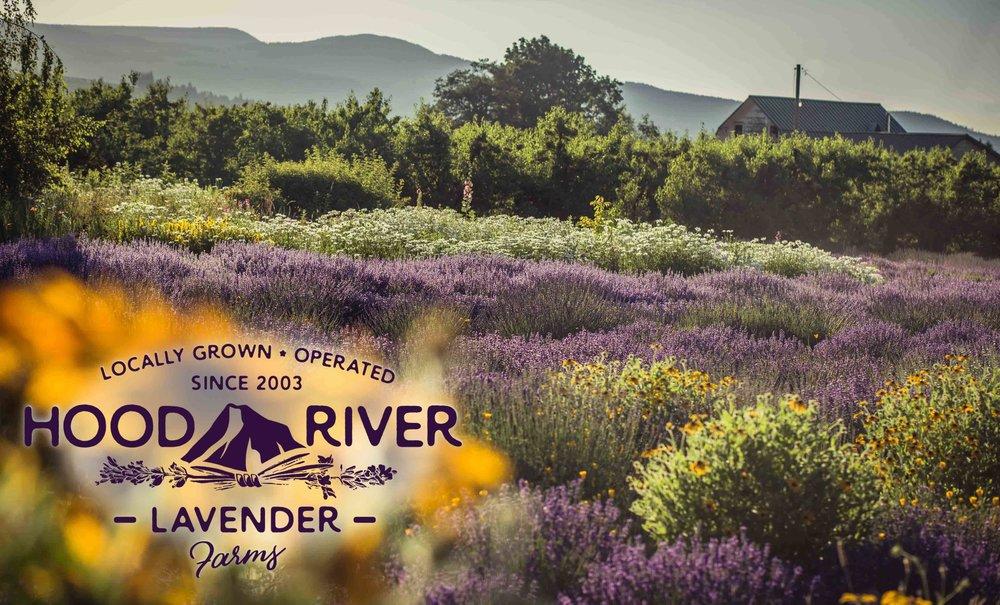 Hood River Lavender Farms 4Columbia Gorge buy lavender online hood river odell portland pacific northwest pnw creams lavender_-3.jpg
