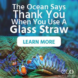 Ecoglass-google+display+ad-+250x250-+fish.png