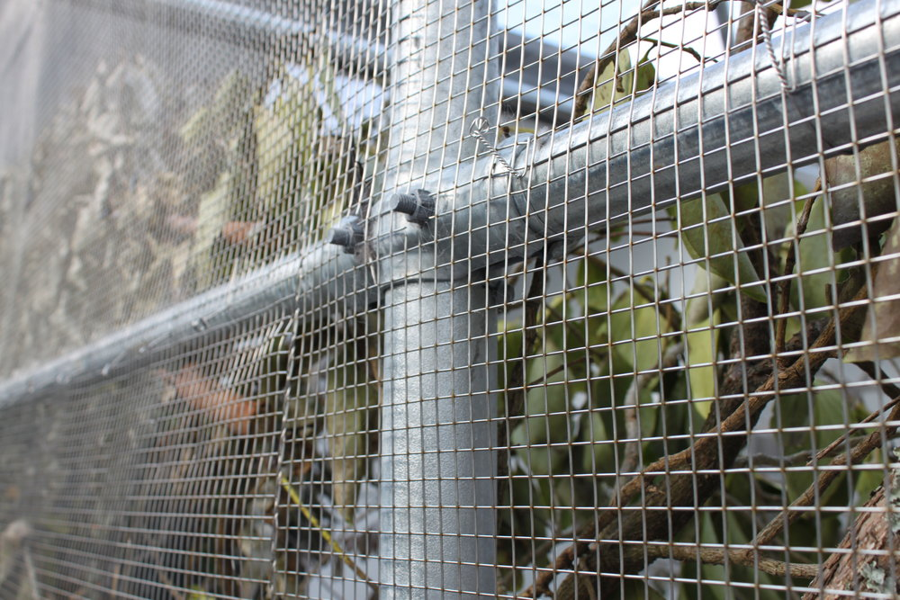 hampden_auckland_zoo_birds_20.jpg