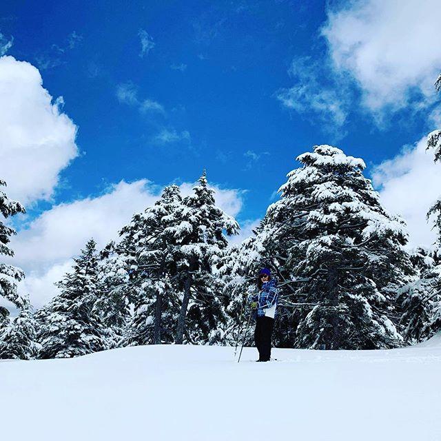 スノーシューハイキング。どなたでもお気軽に体験できます(^^) キラキラした雪の中を歩くのは、気分転換には最高です。特にお忙しい方にはオススメです。  器具のレンタルもしています🎿  #snowshoes #shigakogen #sachinoyuhotel #nagano #japow #japan #癒しの宿幸の湯