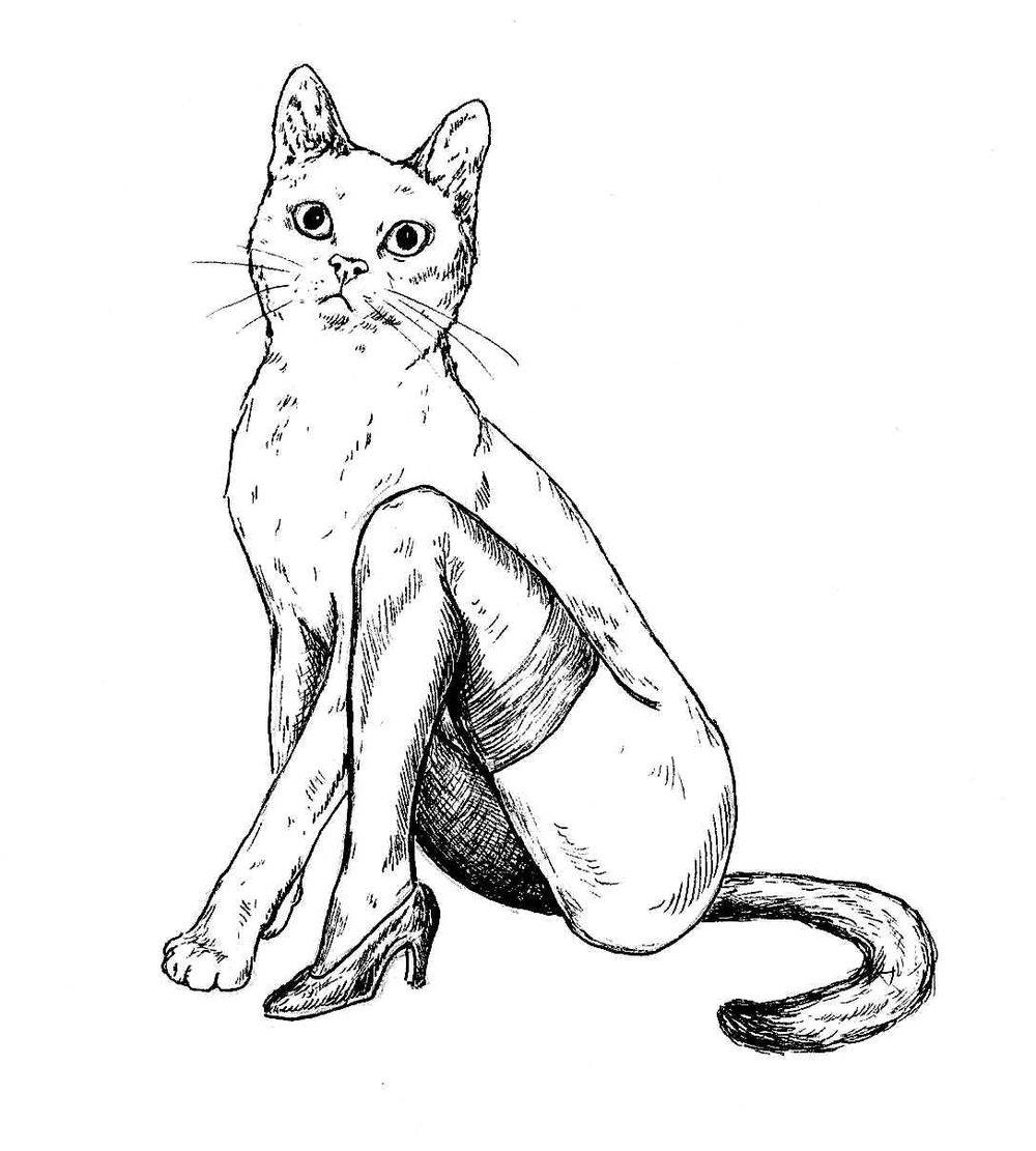 simplecat.jpg