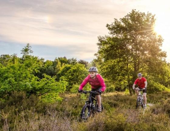Bike rental -