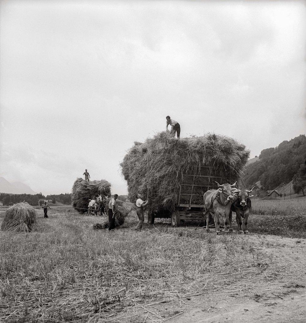 13750_landwirtschaft.jpg
