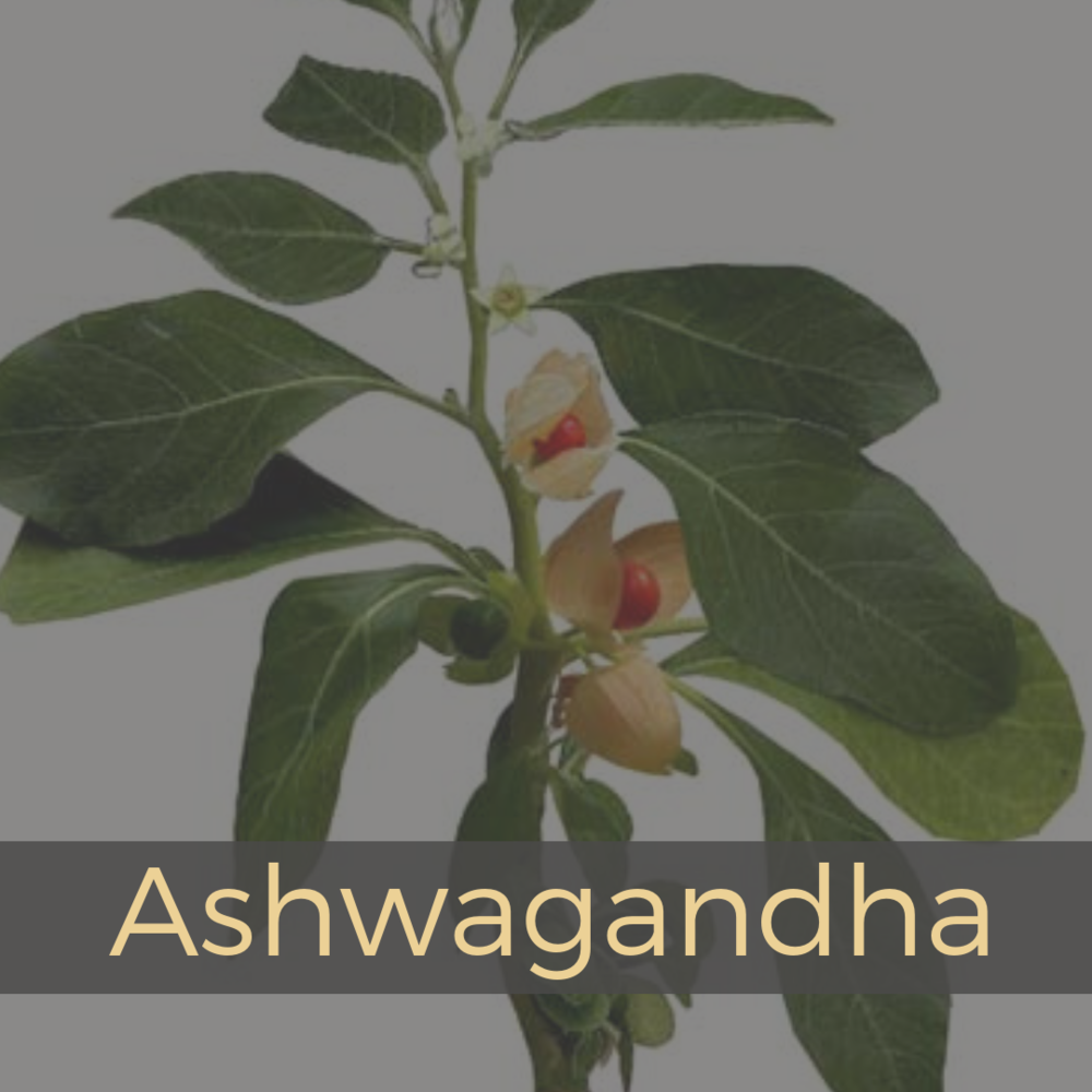 Ashawaganda.png