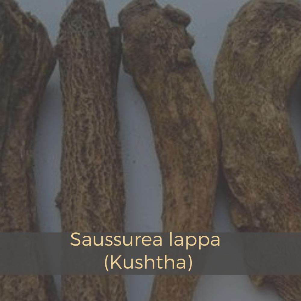 Saussurea lappa (Kushtha).png