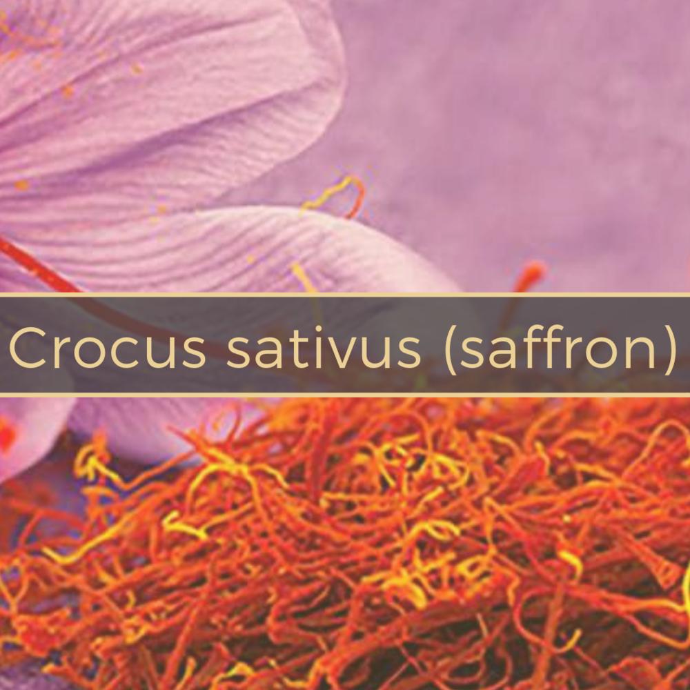 crocus sativus (saffron) Gerson Institute of Ayurvedic Medicine (3).png