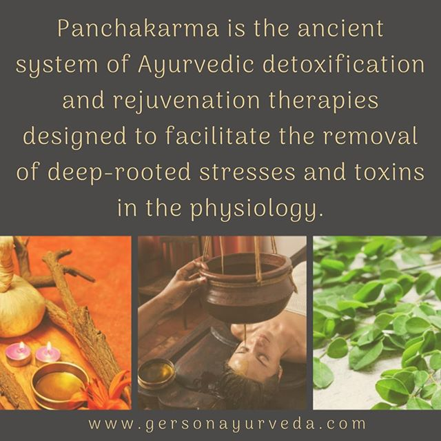 """Panchakarma is the ancient system of Ayurvedic detoxification and rejuvenation therapies designed to facilitate the removal of deep-rooted stresses and toxins in the physiology. Ayurveda recommends these cleansing therapies up to three times a year--at the change of seasons--in order to maintain well-being in healthy individuals or to restore balance in those experiencing illness. The purpose of panchakarma is to extend the lifespan. By undergoing panchakarma on a regular basis muscle tissue, bone, immune function, digestive function, nervous tissue as well as teeth and hair (upadhatus or """"secondary tissues"""") can be maintained, essentially adding years to one's life. Today, even modern science estimates that longevity is determined 30% by one's genetics and 70% by lifestyle choices.⠀ ⠀ Panchakarma is a medical treatment and should be administered by a medical professional to ensure the safety and well-being of a patient's health. ⠀ ⠀ To Learn More Please Visit: https://buff.ly/2OzxAyZ⠀ ⠀ #panchakarma #ayurveda #ayurvedicmedicine #ayurvedicdoctor #integrativemedicine #detox #detoxification #muscles #stress #toxins #genetics #florida #retreat #teeth #immunesystem"""