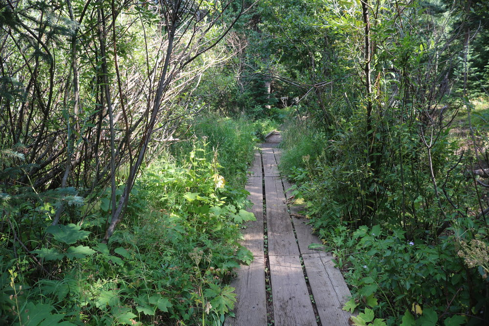 Upcoming Walks - Reconnect with nature, and yourself, on these slower-paced mindful wanders.