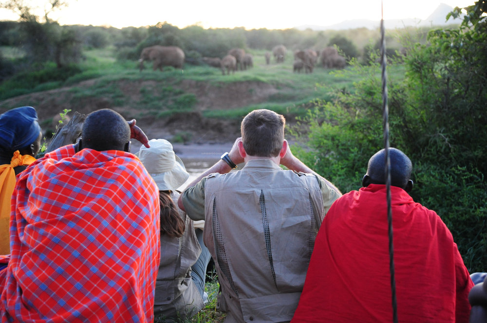 elephantswatchingwalkingsafari.jpg