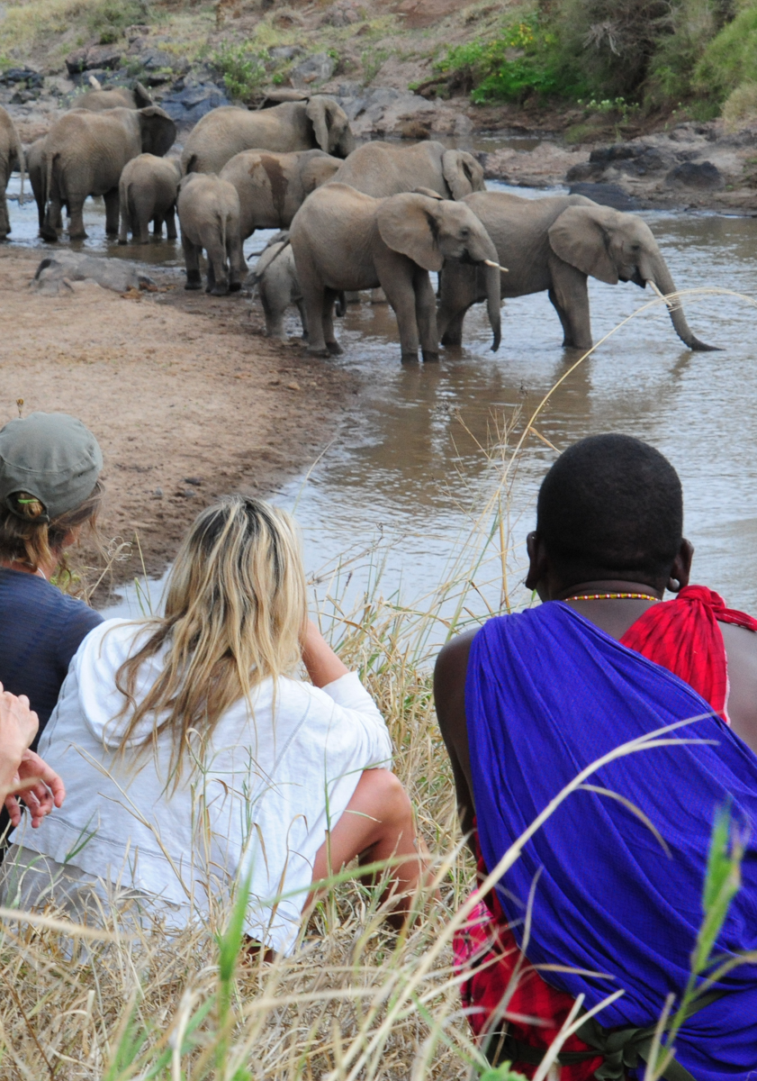 guidingwalkingsafarielephants.jpg