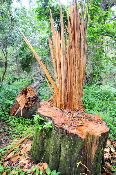 Trees Being felled like mad in Karisia Hills