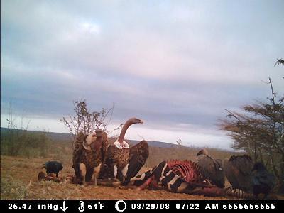 vultures3.jpg