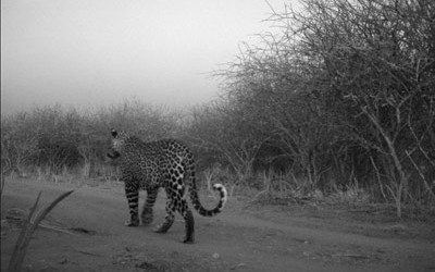 leopard-400x250-1.jpg