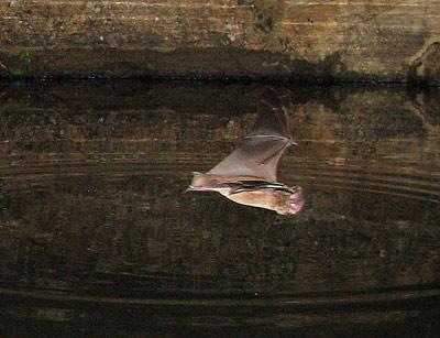bat_closeup21.jpg