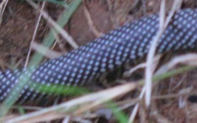 snake3-400x250-1.jpg