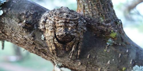 spider2-500x250-1.jpg
