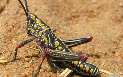 grasshoper-400x250.jpg