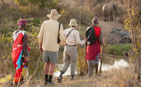 elephantonriverwwalkingsafari.jpg