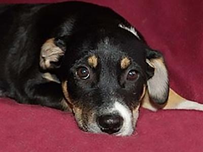 008a-joseph-puppy-training-testimonial.jpg