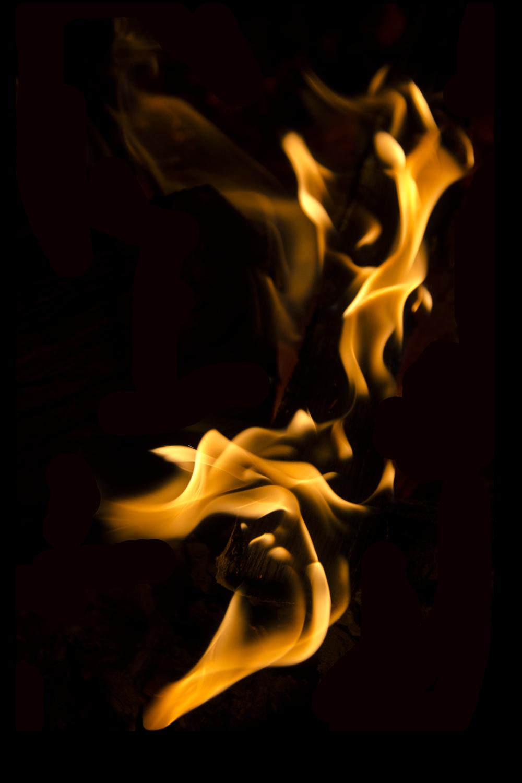fire bird copy.png