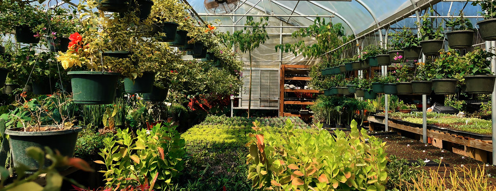 ThMore than thirty greenhouses