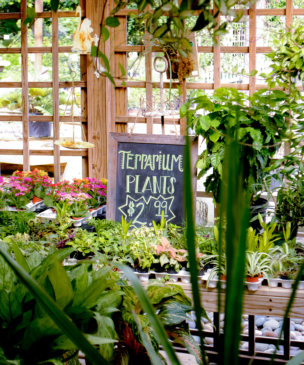 Large and small houseplants at Enchanted Forest create a beautiful scene of layered textures and colors. A hand-painted sign announces the terrarium plants. The layer materials and container choices are in the gift shop.