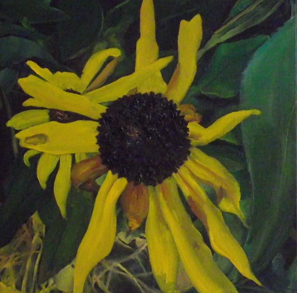 "sunflower, 2013, oil on canvas, 16"" x 16"""