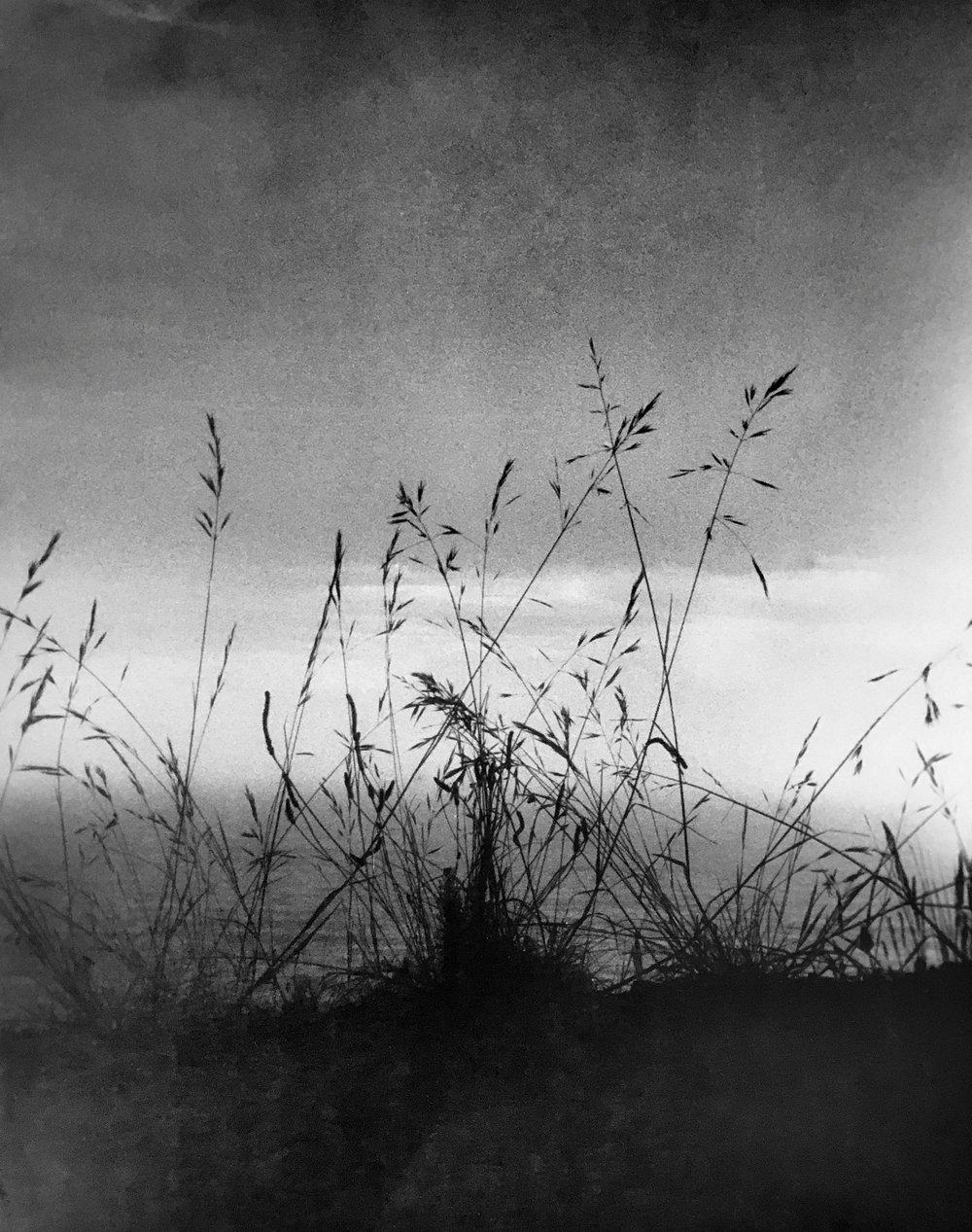 Summer Grass, 2001