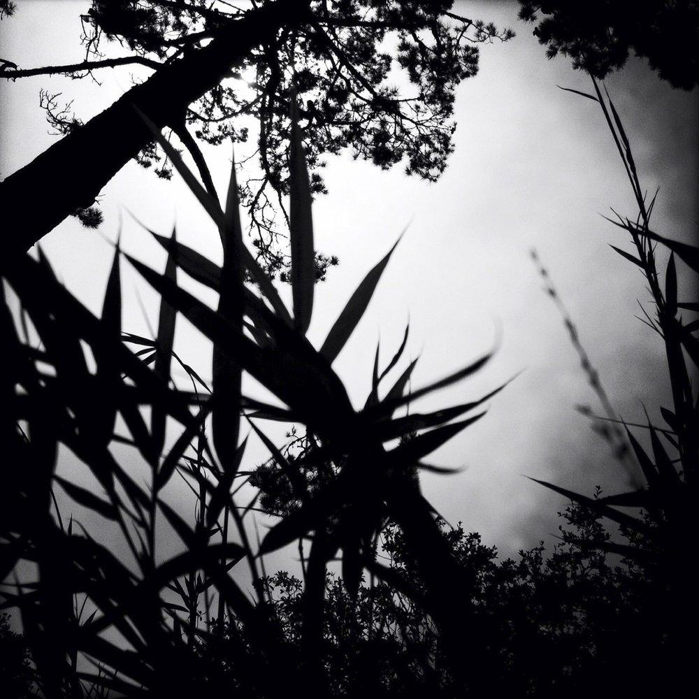 Backyard Jungle, 2012
