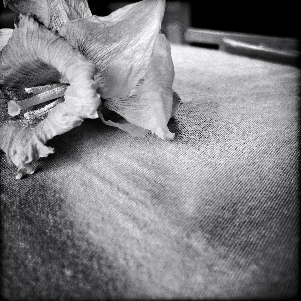 Dying Daffodil I, 2012