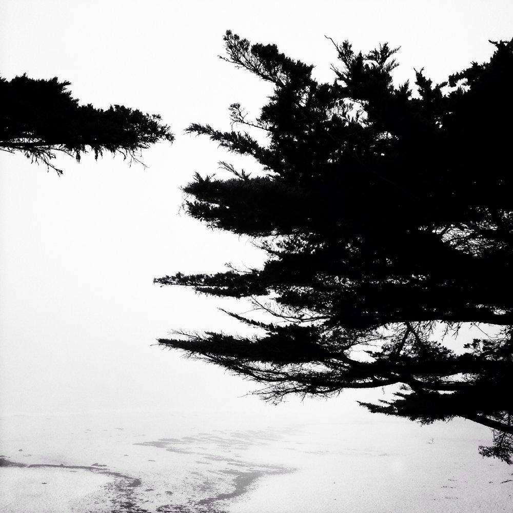 Foggy Path, 2014