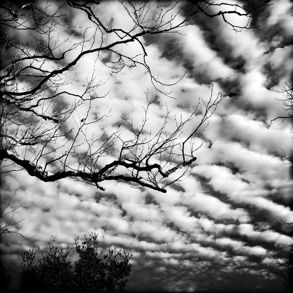 Sky and Branches, 2015.jpg