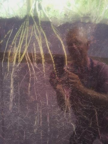 HW roots_0.jpg