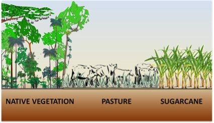 The main land use change for sugarcane production in the center-south part of Brazil.)