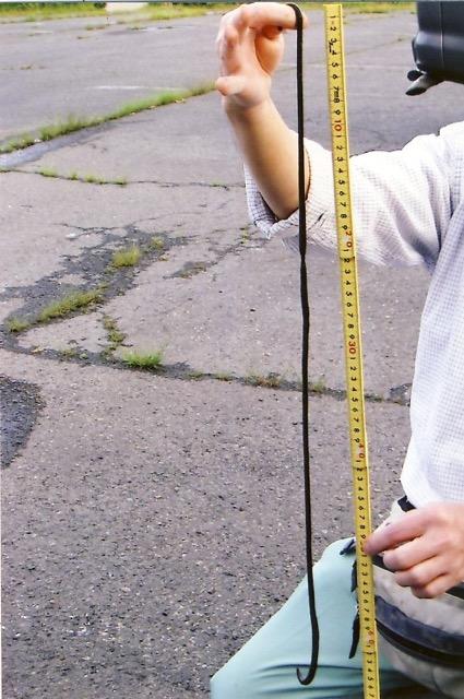 Hatt -mimizu earthworm %28 92 cm in length).jpeg