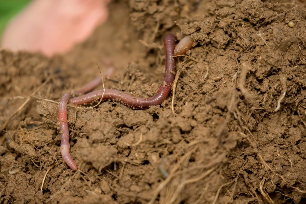 Earthworms at work