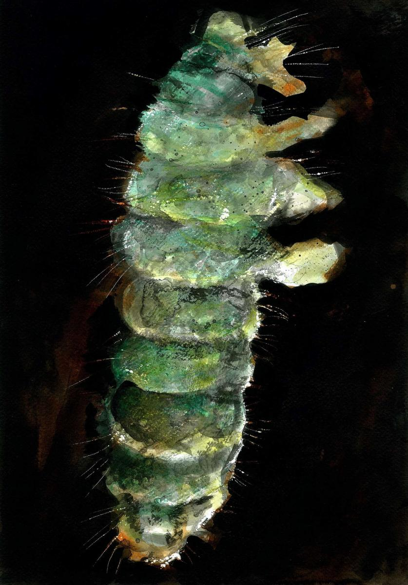 Emerald springtail. Image by: Ed Reynolds