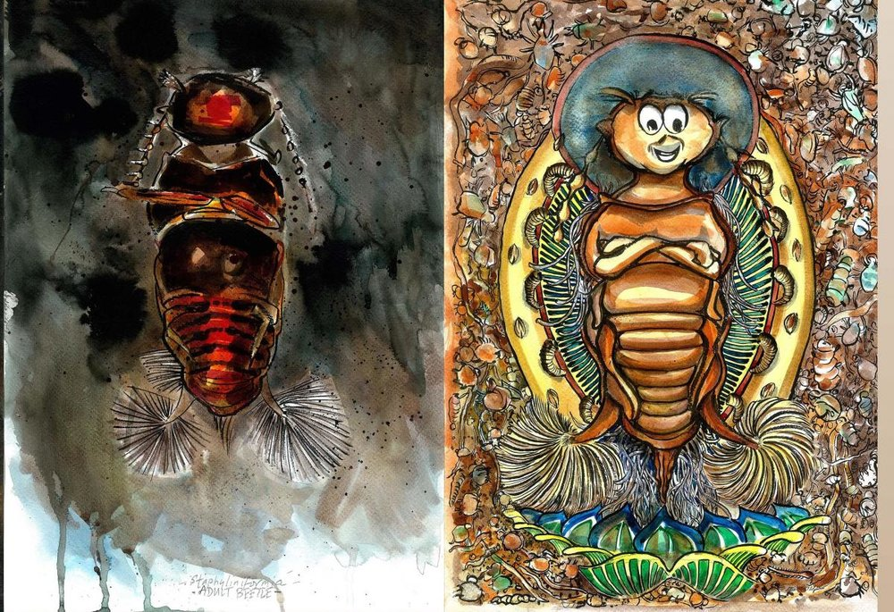 Transformation of beetle larvae. Image by: Ed Reynolds