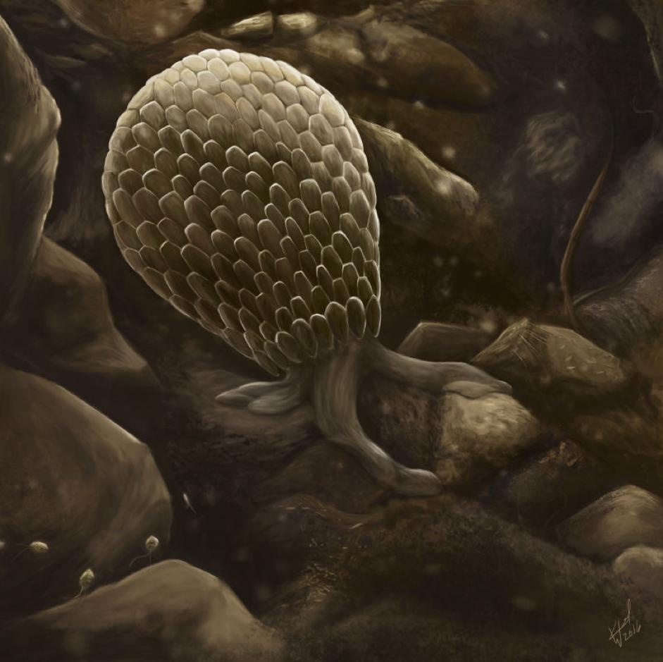 Testate amoeba. By Katelyn Weel