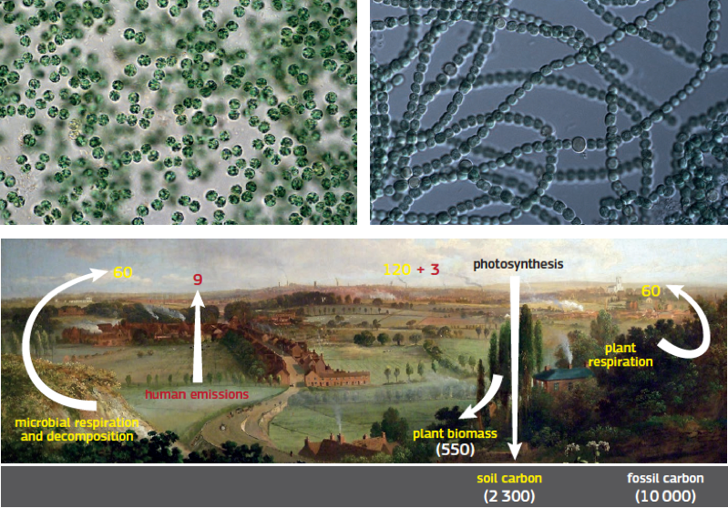 Cyanobacteria (top left, right) oxygenated Earth's atmosphere, Soil organisms cycle greenhouse gases like carbon dioxide (bottom). Photo credit: K. Siampouli, Futurilla, Art by MarkAC, EU Joint Research Center; Numbers calculated by US DOE, Biological & Environmental Research Information System.