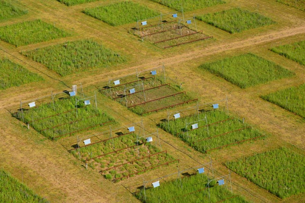 Aerial view of Biodiversity & Climate experiment. Image by J. Miller