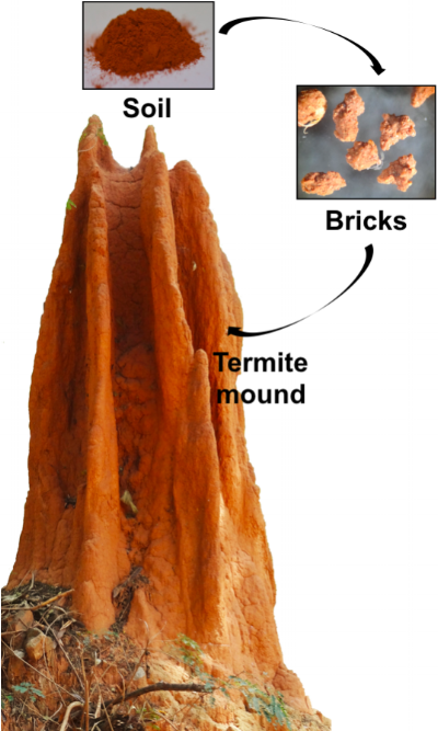 Termite mound construction using bricks. Image by N. Zachariah