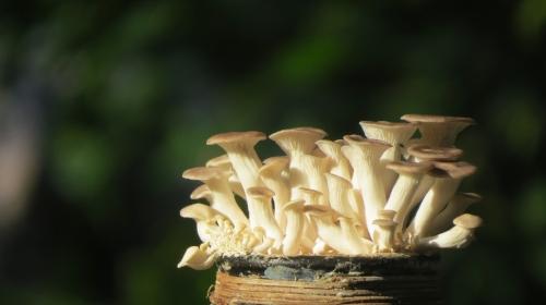 oyster-mushroom-bottle-2641554_1920.jpg