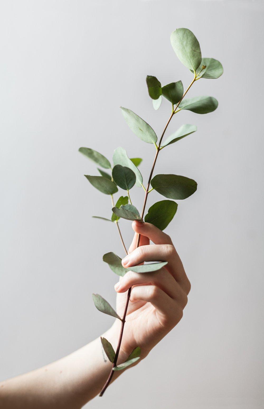 hand eucapyptus-unsplash.jpg