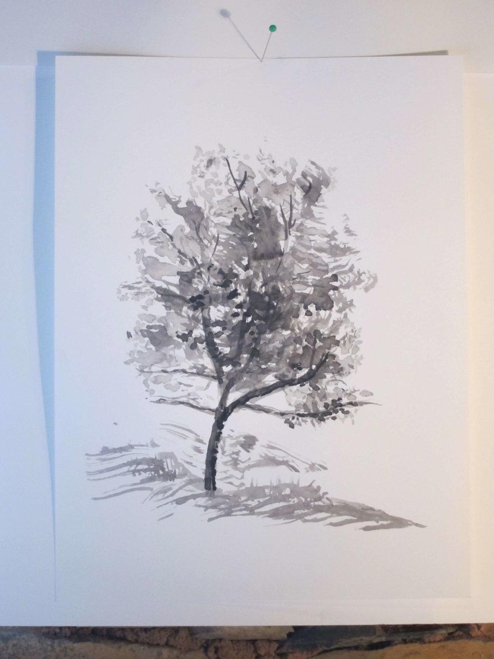 5 dias de desenho na natureza1.jpg
