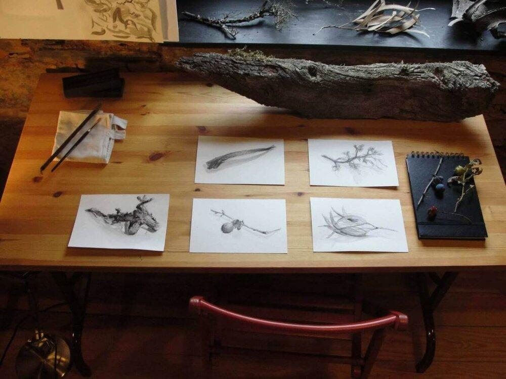 5 dias de desenho na natureza4.jpg