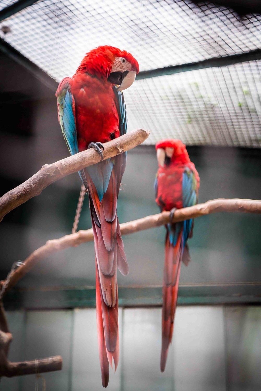 bird-sitters-pet-services-austin-tx.jpg