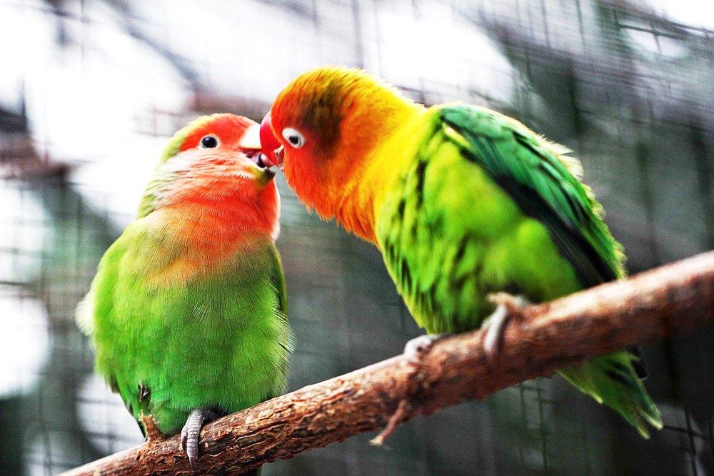 bird-sitting-pet-care-services-austin-tx.jpg