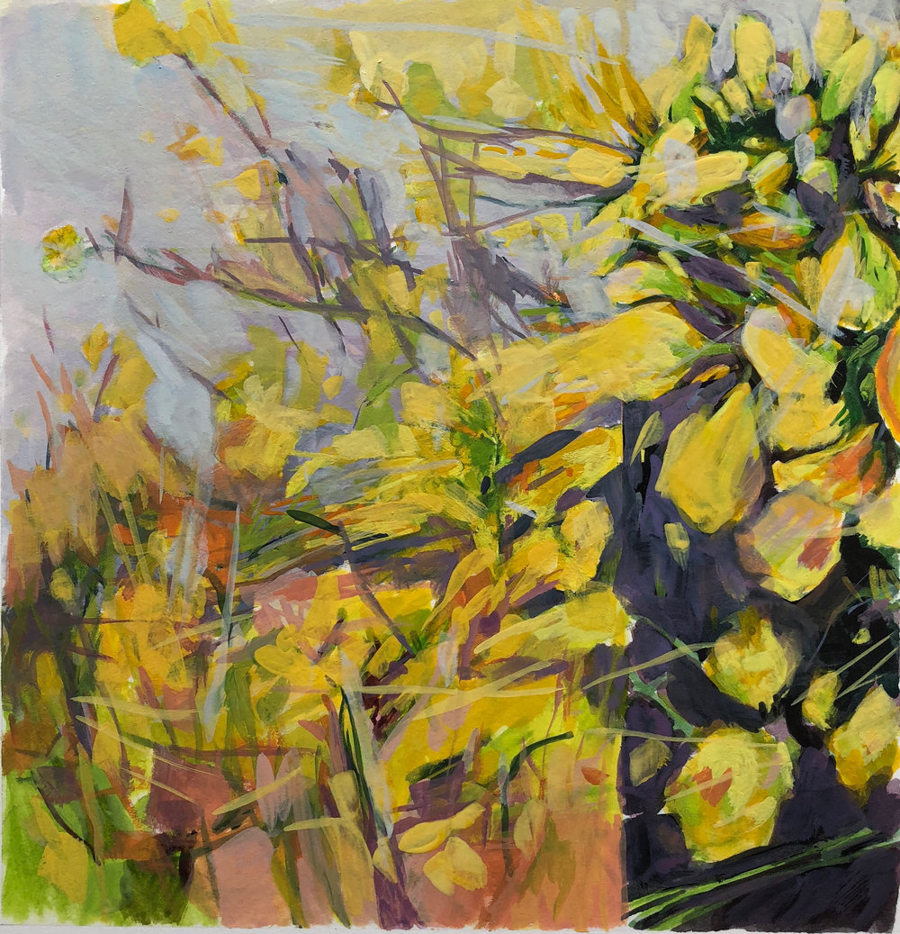 Wild Mustard Tangle 2018 7.25''x7'' gouache on Arches